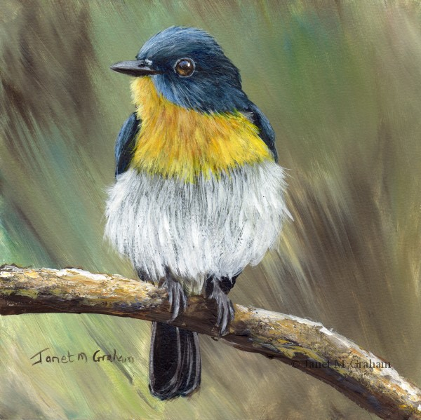 """Tickell's Blue-Flycatcher"" original fine art by Janet Graham"