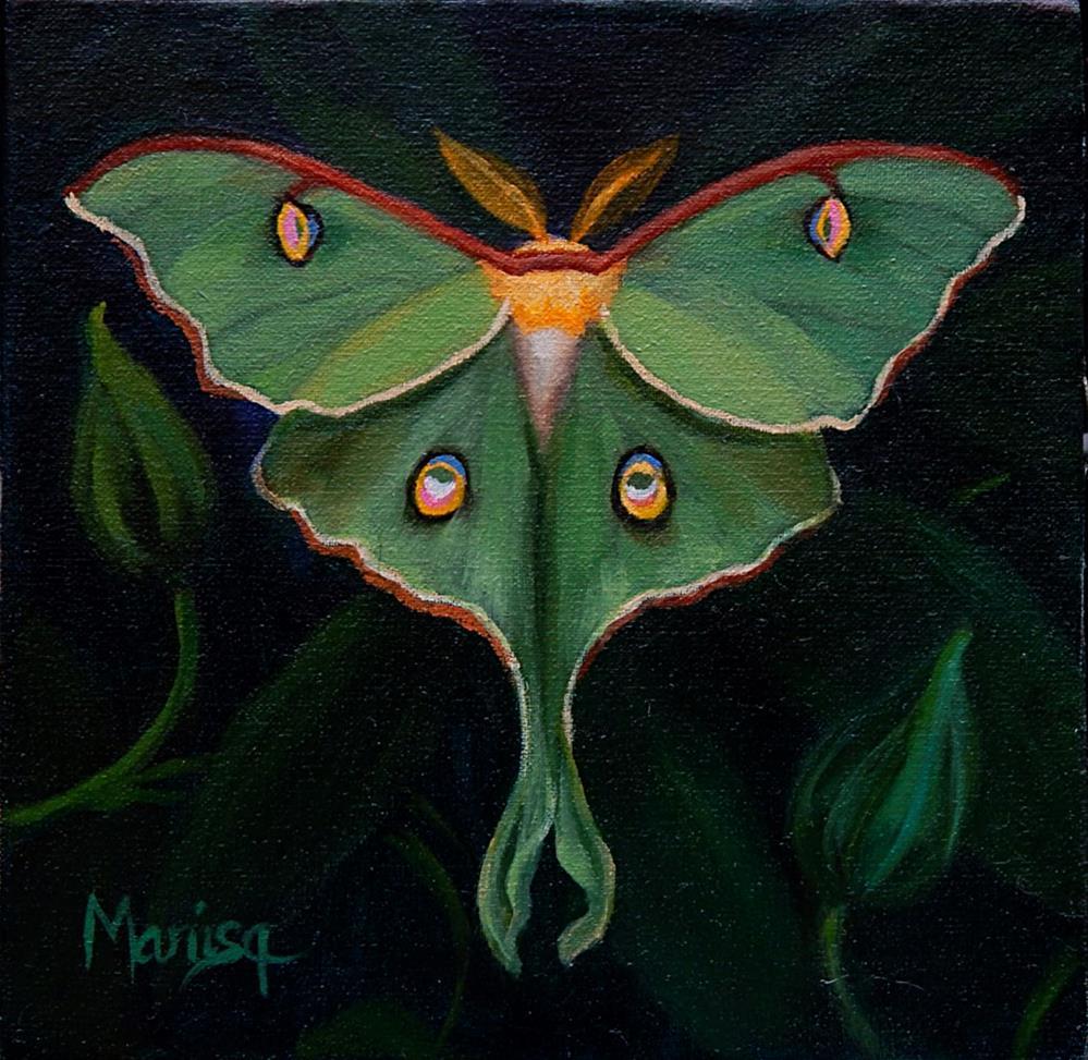 """""""Luna Moth"""" original fine art by Marisa Eichman Kupiec"""