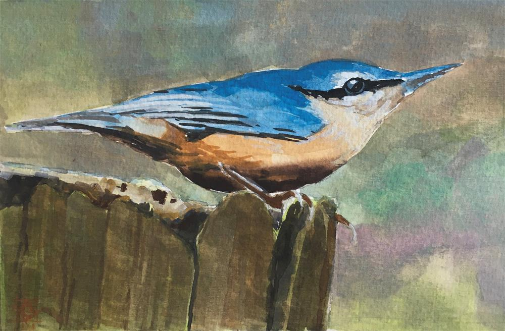 """""N"" is the Nuthatch"" original fine art by Carol Granger"