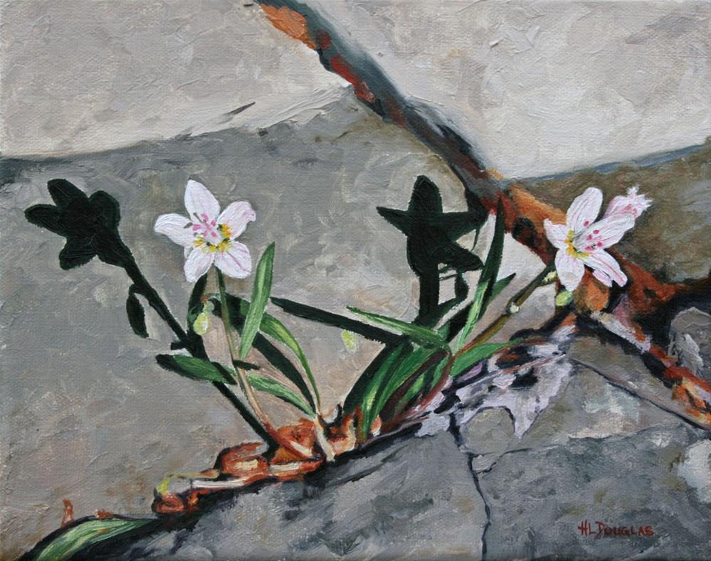 """Spring Beauty"" original fine art by Heather Douglas"