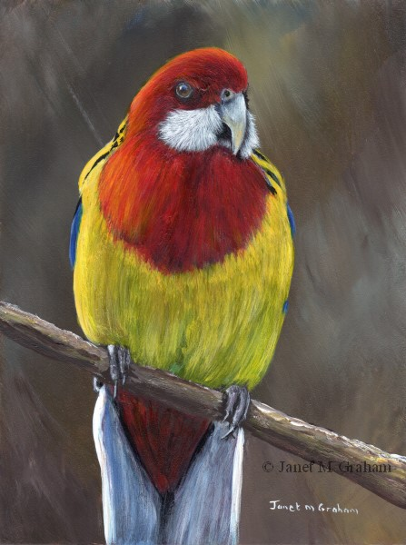 """Eastern Rosella"" original fine art by Janet Graham"