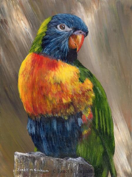"""Rainbow Lorikeet No 3"" original fine art by Janet Graham"