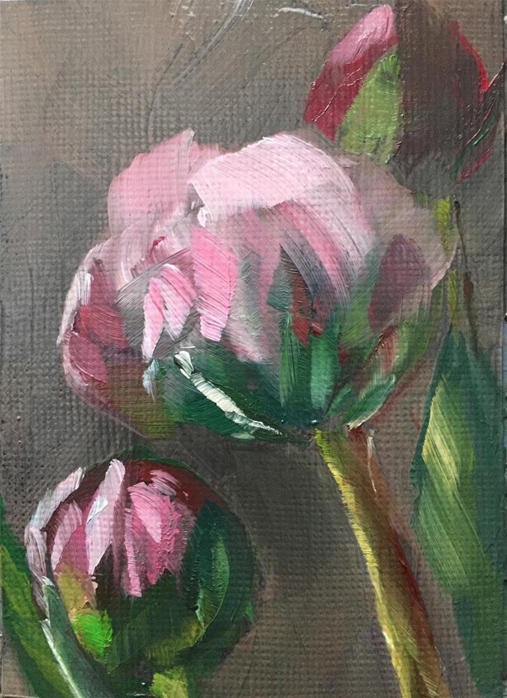 """Peonies, Soft Light"" original fine art by Gary Bruton"