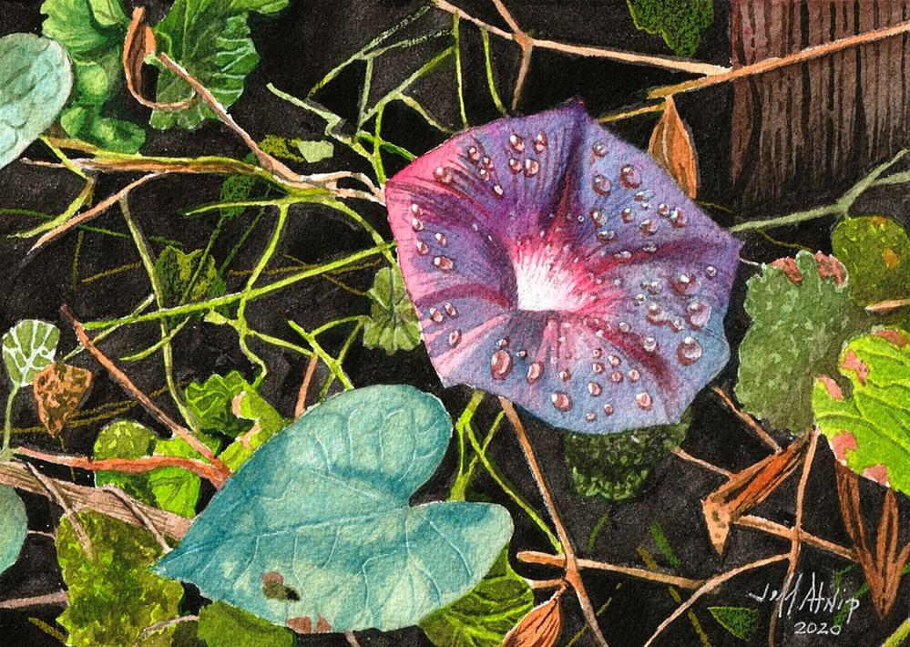"""Morning Glory"" original fine art by Jeff Atnip"