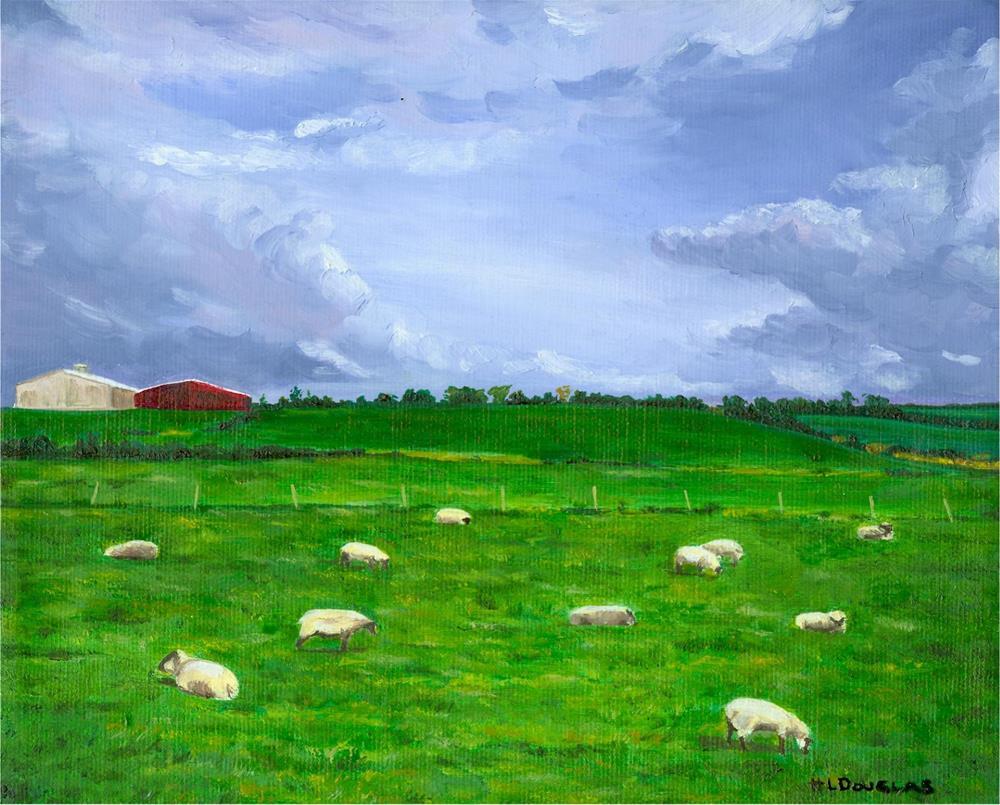 """Kerry Sheep"" original fine art by Heather Douglas"