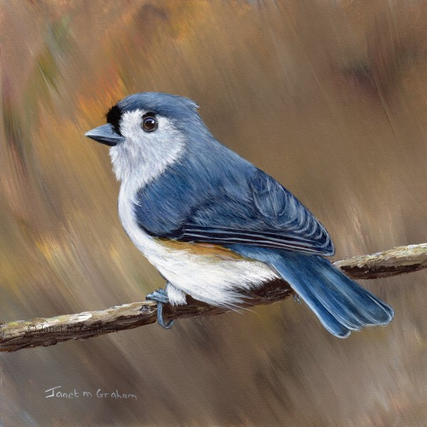 """Tufted Titmouse No 16"" original fine art by Janet Graham"