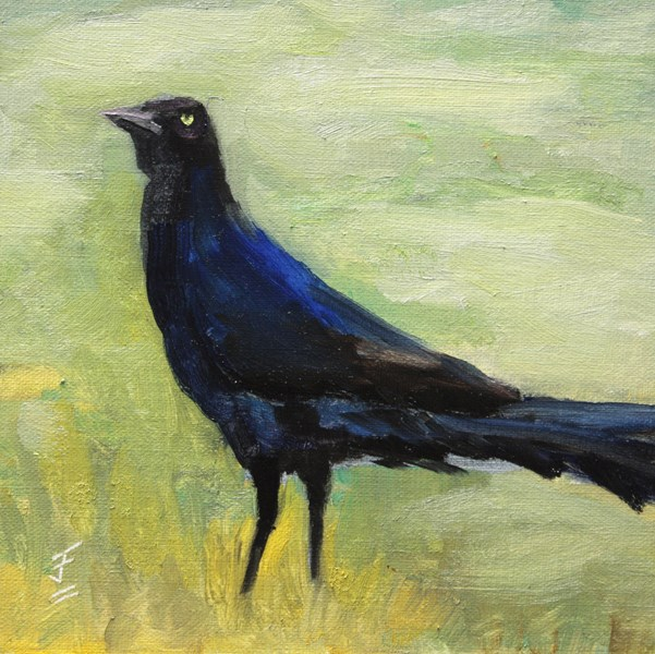 """Grackle"" original fine art by Jane Frederick"
