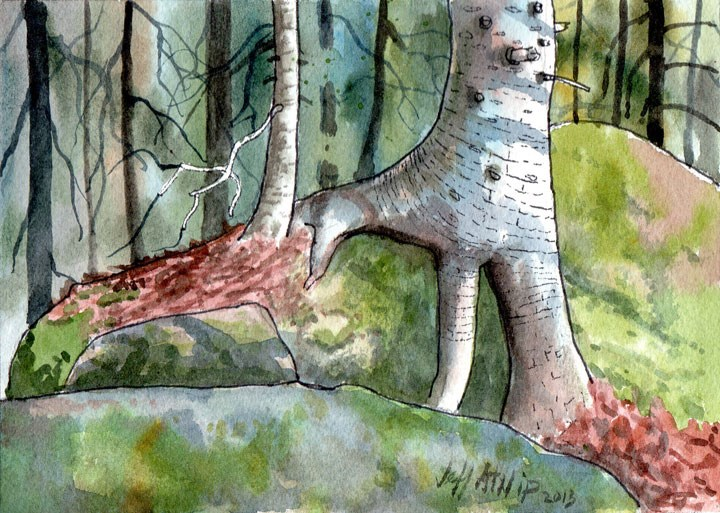 """Root Fingers, Algonquin Park"" original fine art by Jeff Atnip"