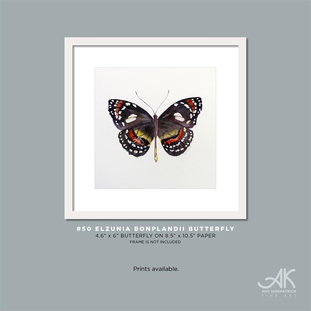 """""""#50 Elzunia Bonplandii Butterfly #0360"""" original fine art by Amy Kirkpatrick"""