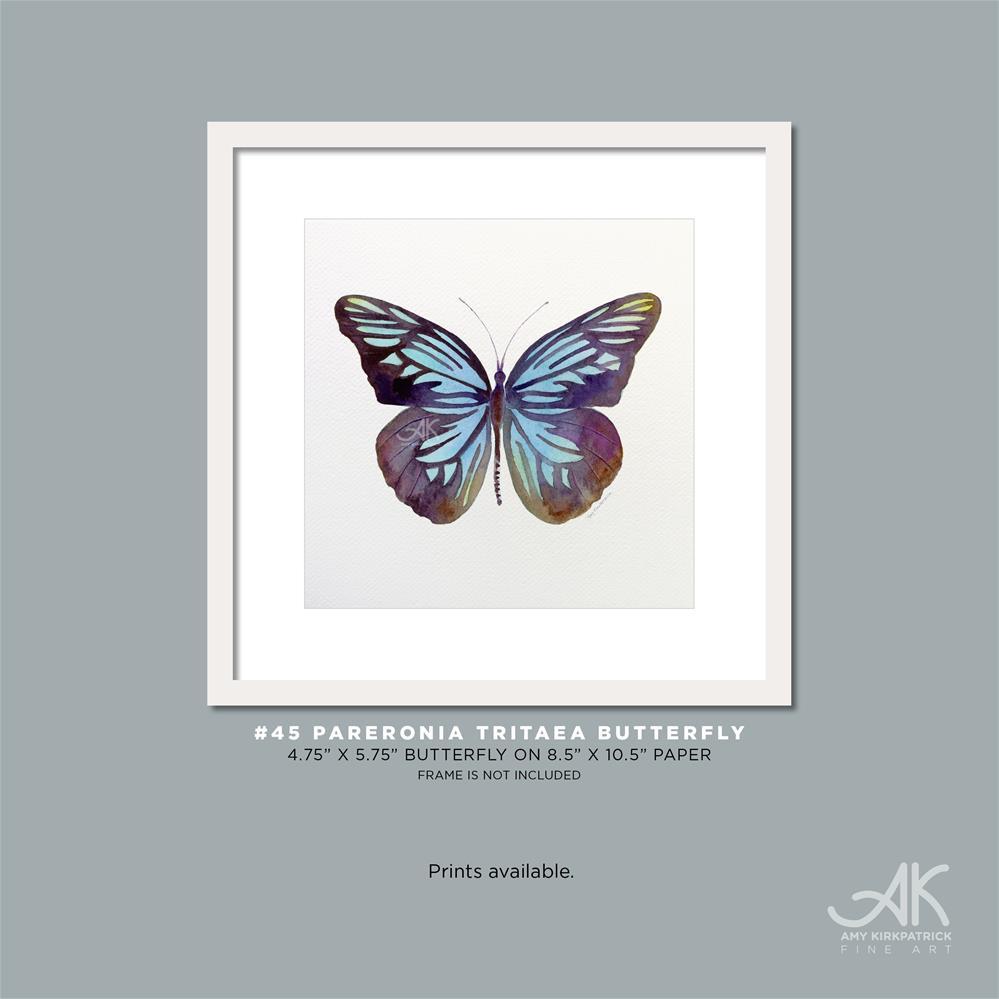 """""""#45 Pareronia Tritaea Butterfly #0354"""" original fine art by Amy Kirkpatrick"""
