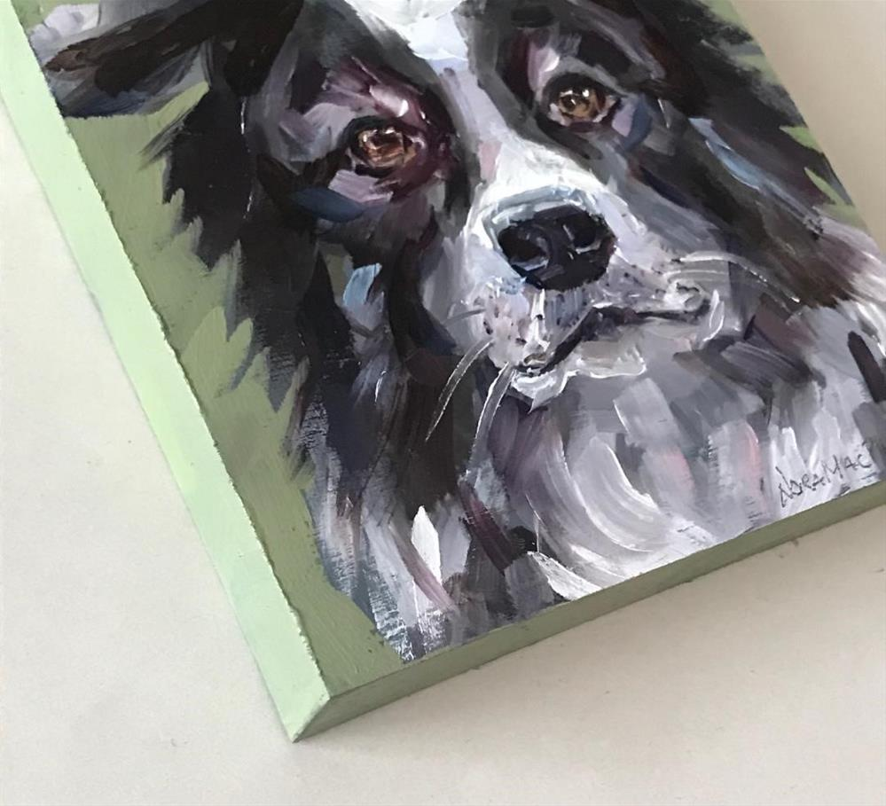 """cutie-patootie border collie"" original fine art by Nora MacPhail"