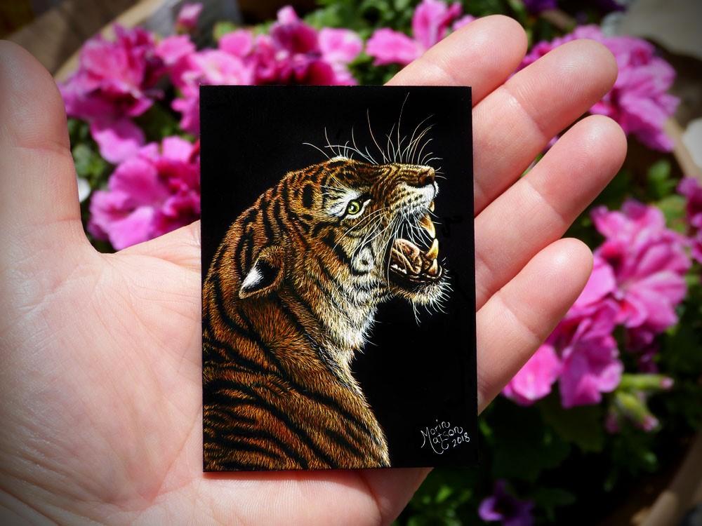 """Tiger"" original fine art by Monique Morin Matson"