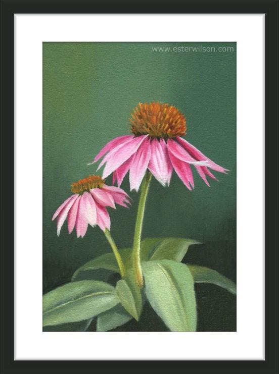 """Echinacea"" original fine art by Ester Wilson"
