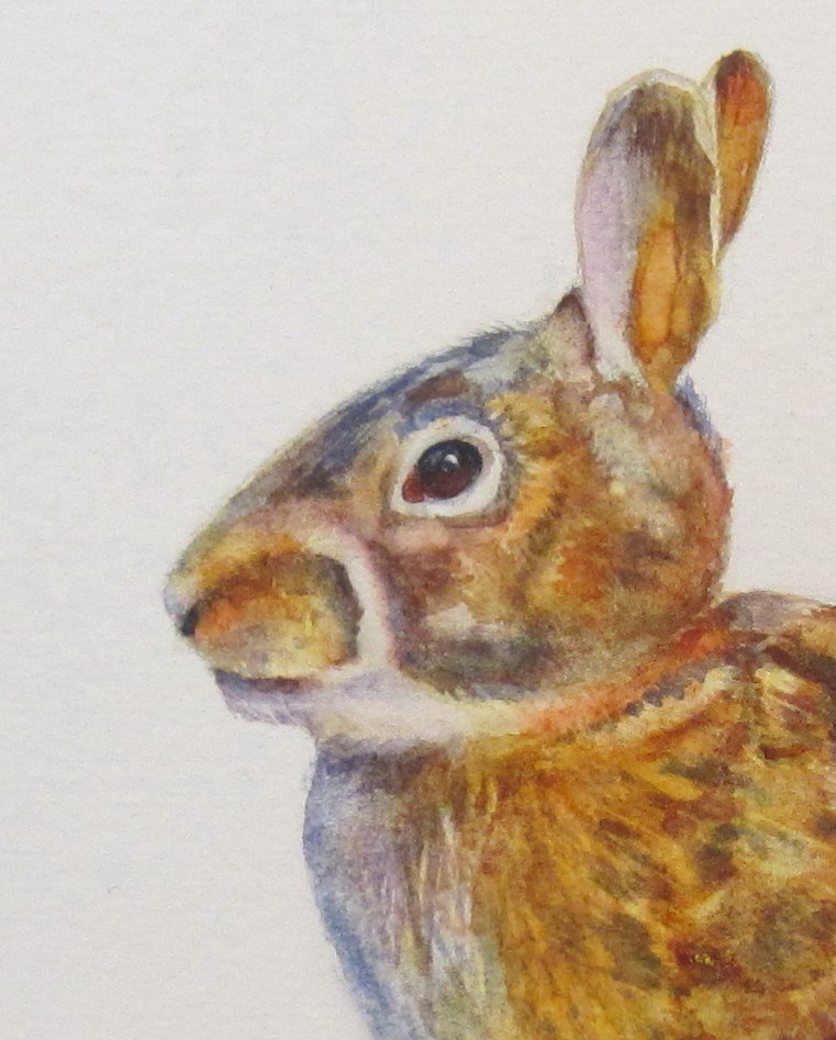 """Young Rabbit, Watercolor by Linda McCoy"" original fine art by Linda McCoy"