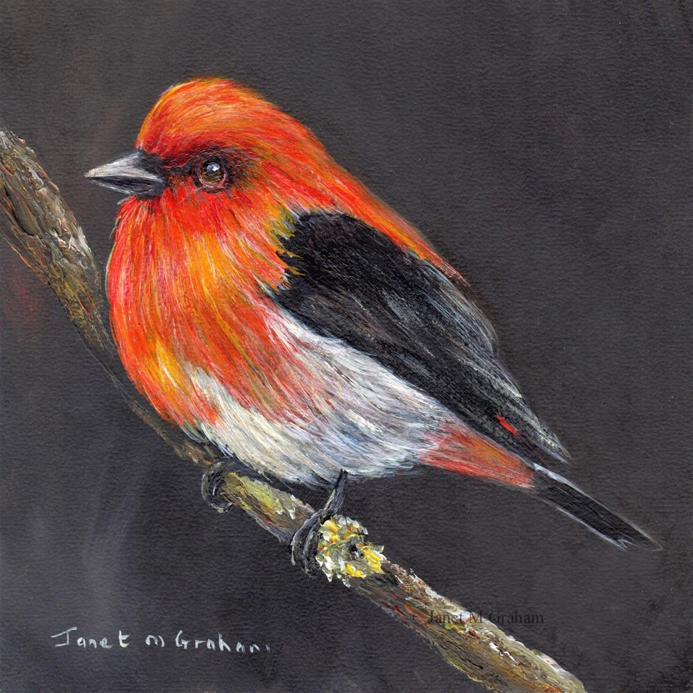 """Scarlet Tanager No 2"" original fine art by Janet Graham"