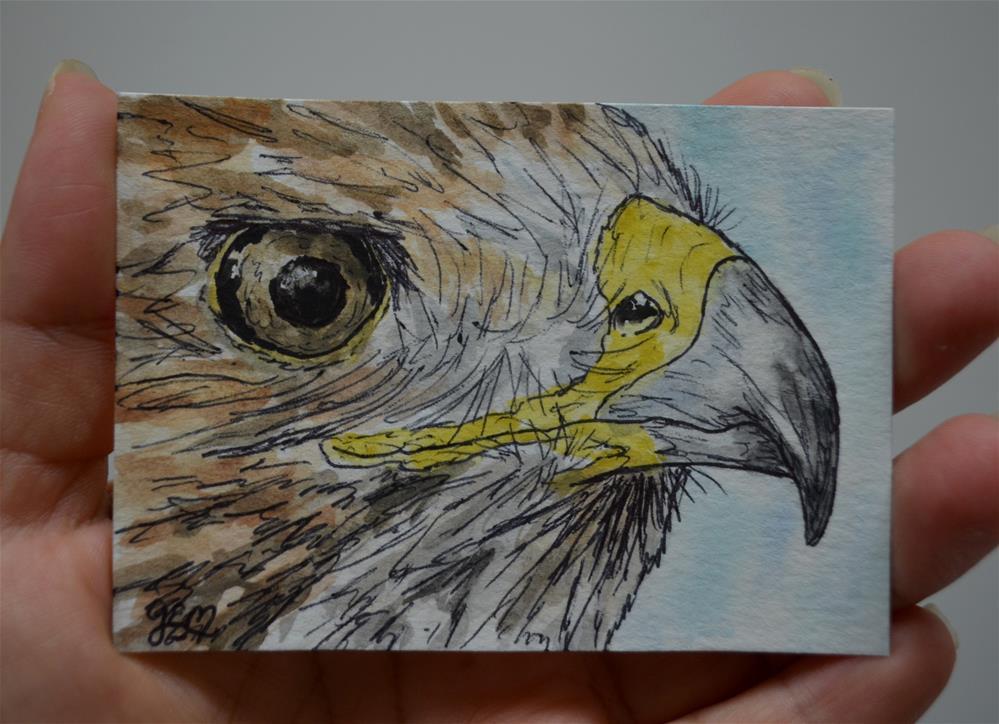 """""""Hawk Watercolor Aceo"""" original fine art by Gloria Ester"""