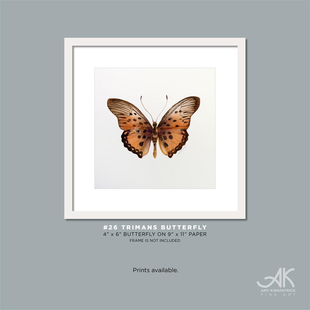 """""""#26 Trimans Butterfly #0335"""" original fine art by Amy Kirkpatrick"""