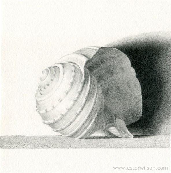 """""""Shell"""" original fine art by Ester Wilson"""