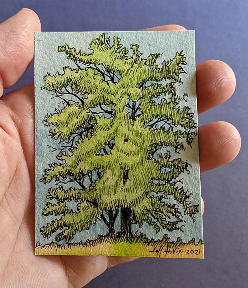 """""""ACEO Tullahoma Tree"""" original fine art by Jeff Atnip"""
