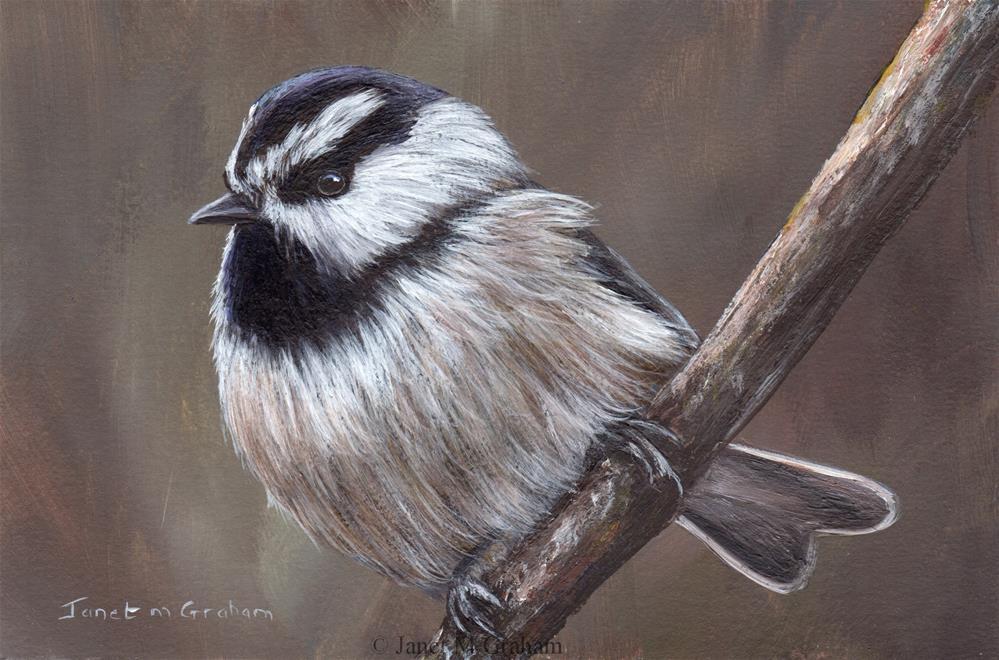 """Mountain Chickadee No 2"" original fine art by Janet Graham"