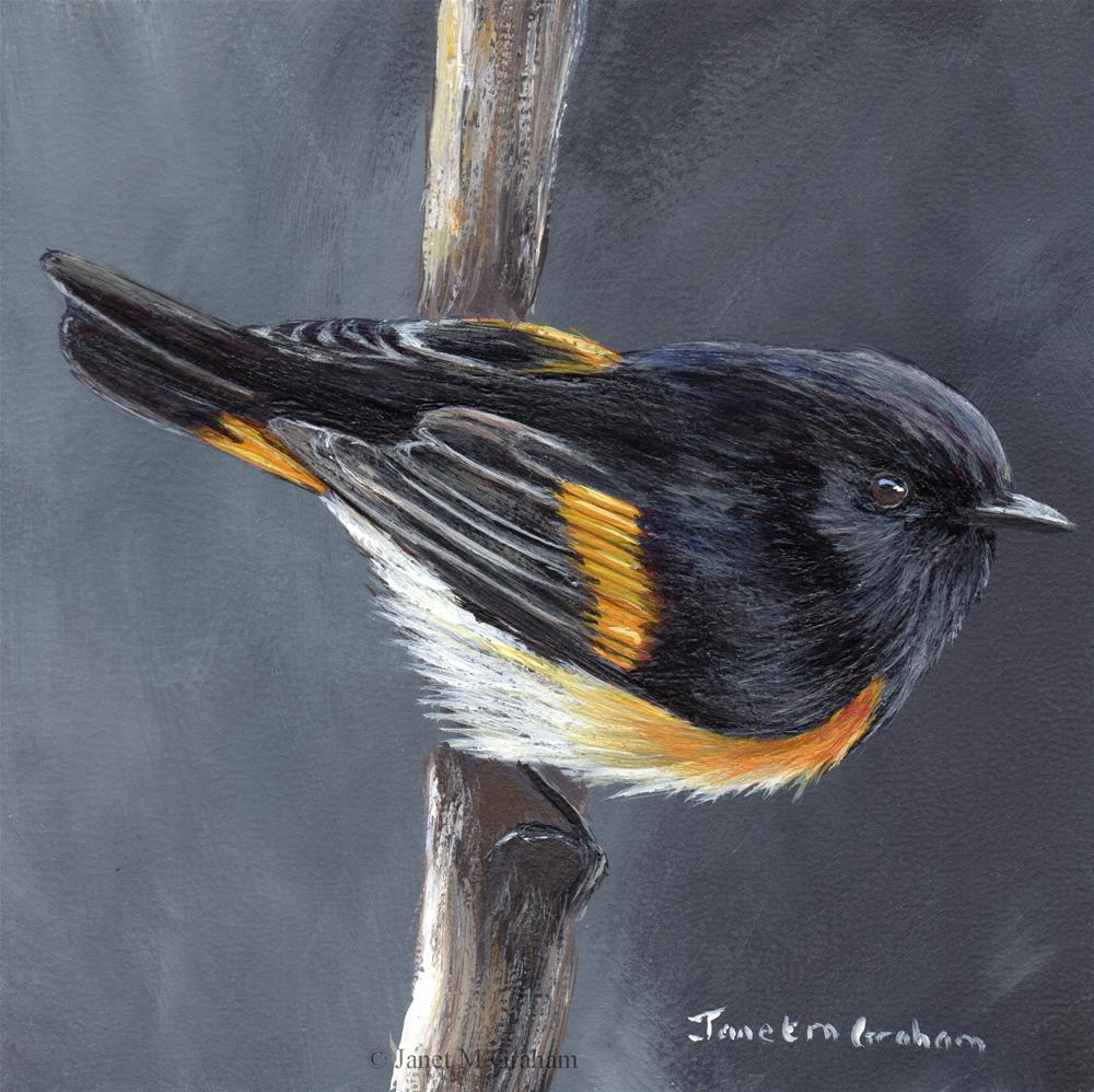 """American Redstart"" original fine art by Janet Graham"