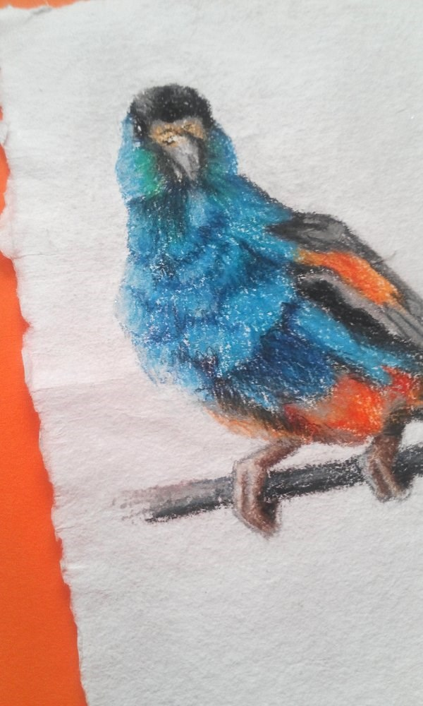 """Parrot"" original fine art by Camille Morgan"