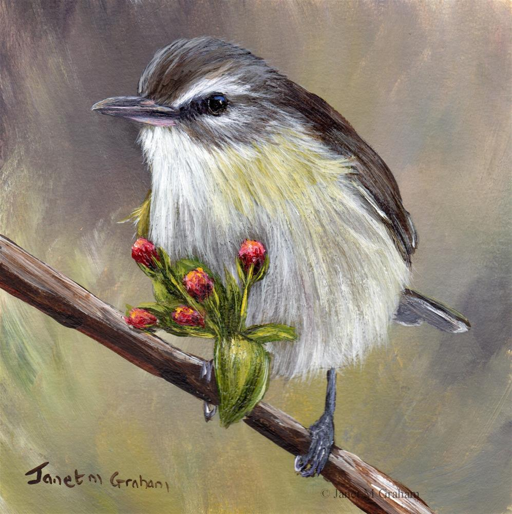 """Warbling Vireo"" original fine art by Janet Graham"