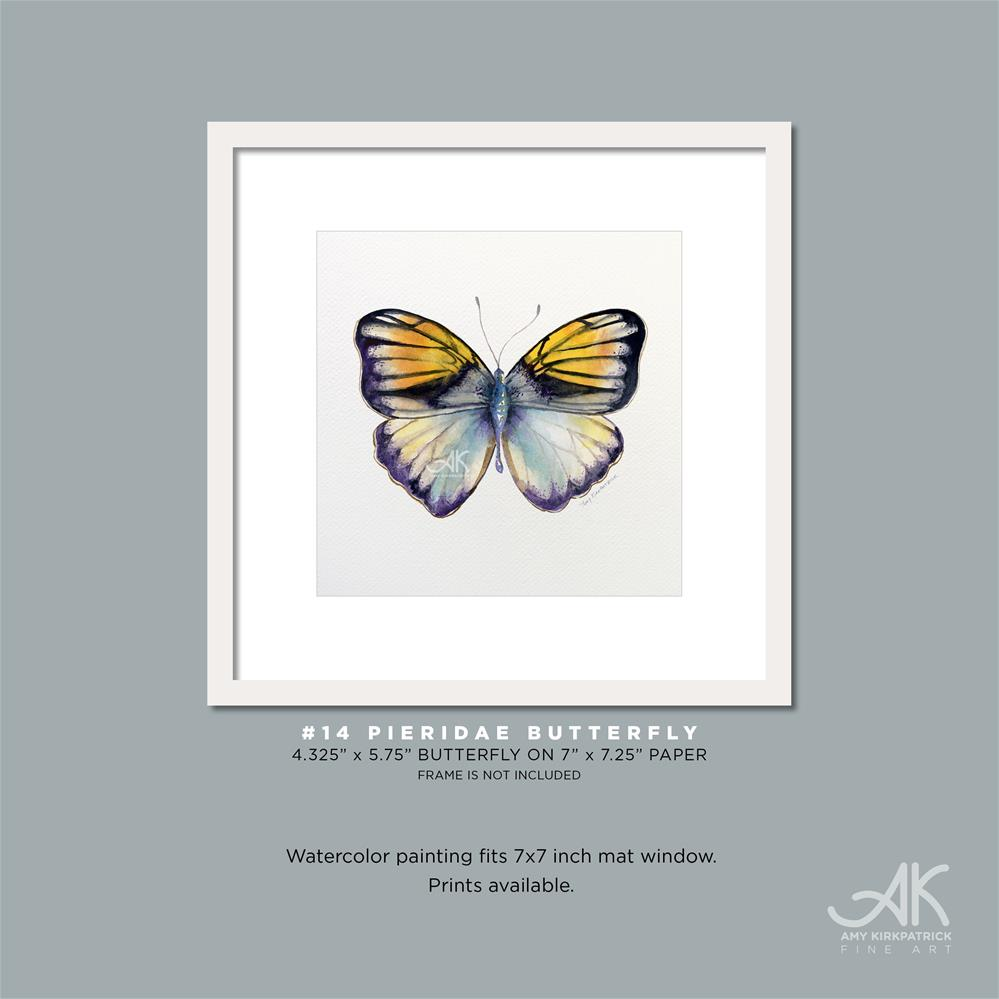 """#14 Pieridae Butterfly #0323"" original fine art by Amy Kirkpatrick"