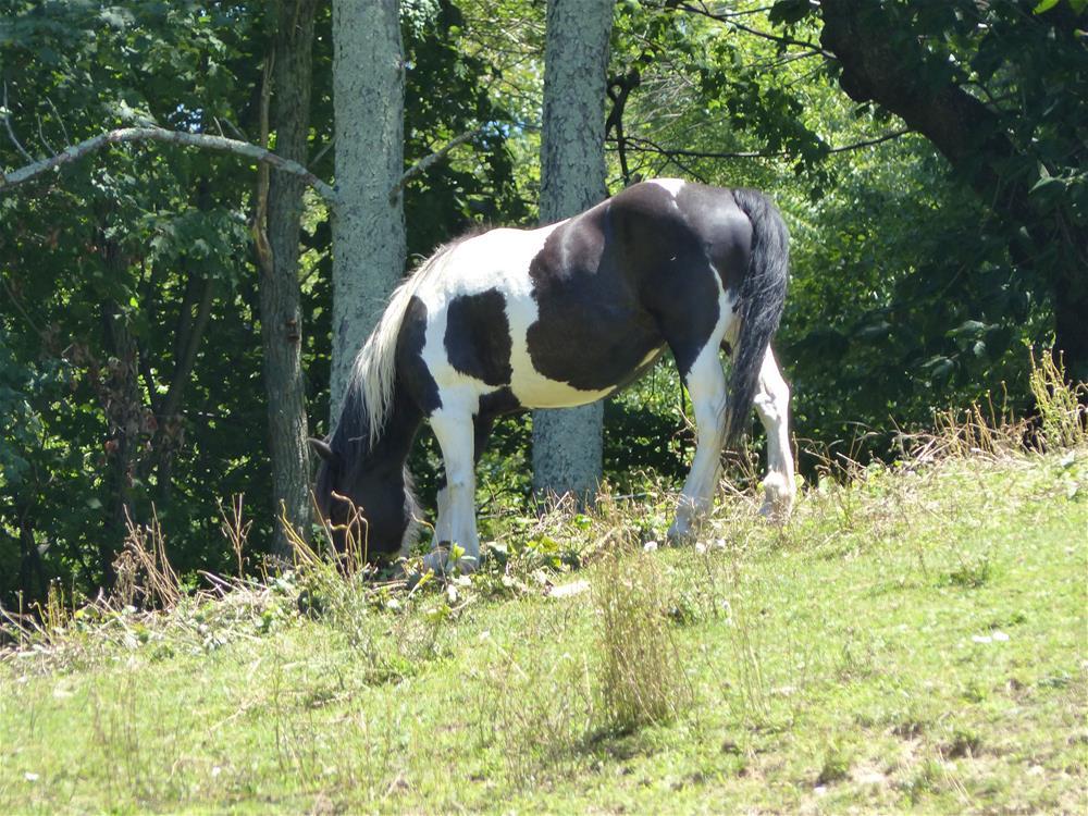 """Horse, Valle Crucis, NC"" original fine art by Judith Freeman Clark"