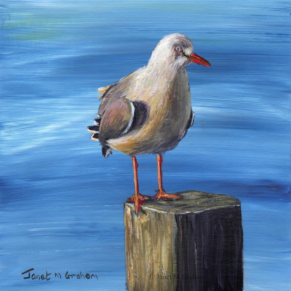 """Sunlit Seagull"" original fine art by Janet Graham"