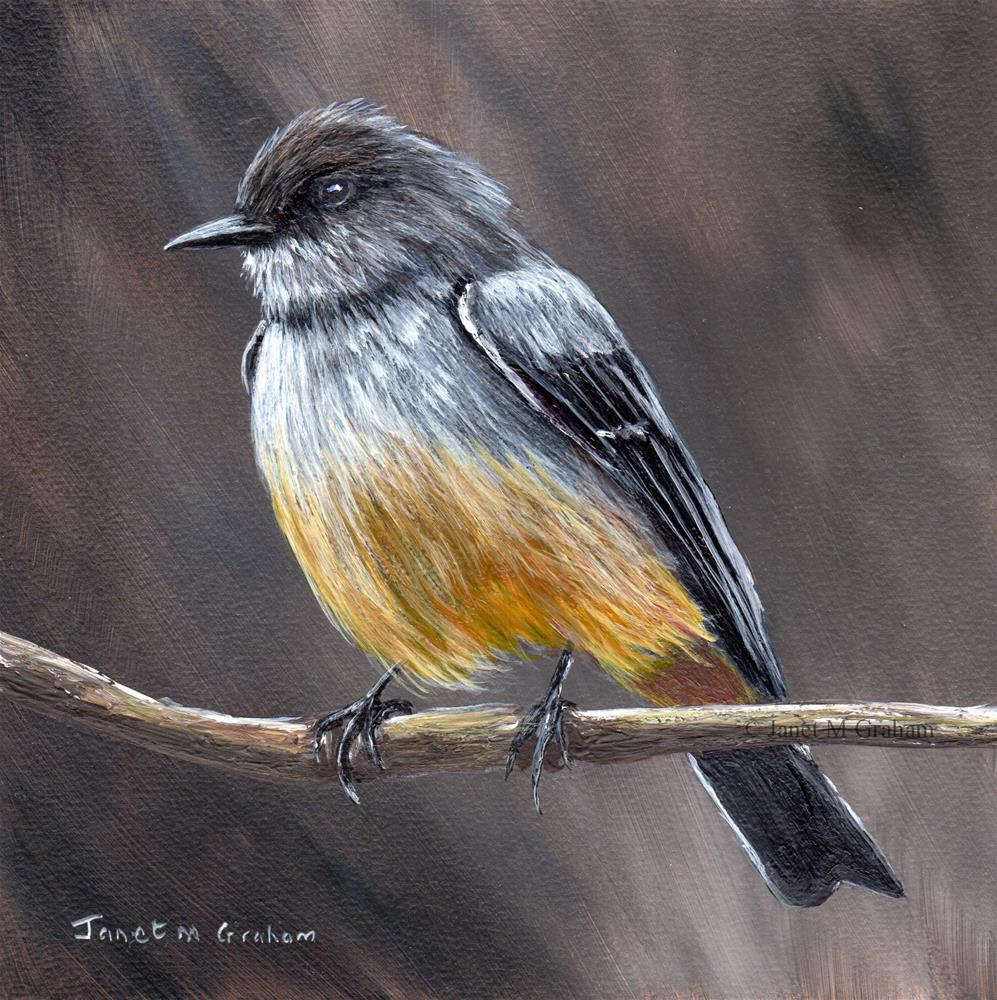 """Say's Phoebe"" original fine art by Janet Graham"