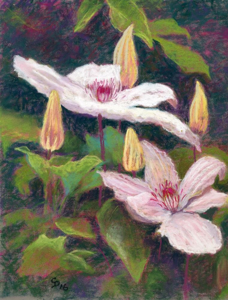 """""""Clematis"""" original fine art by Christine Derrick"""