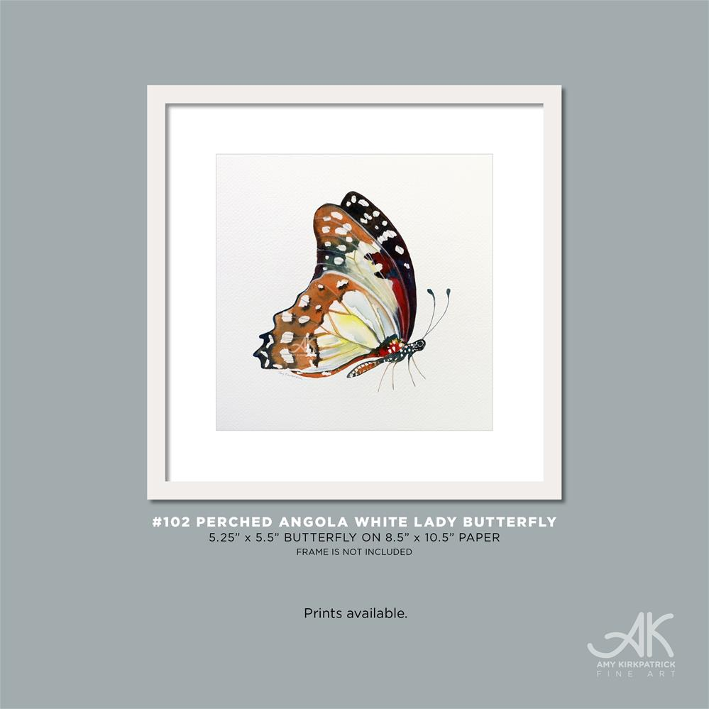 """#102 Perched Angola White Lady Butterfly #0422"" original fine art by Amy Kirkpatrick"