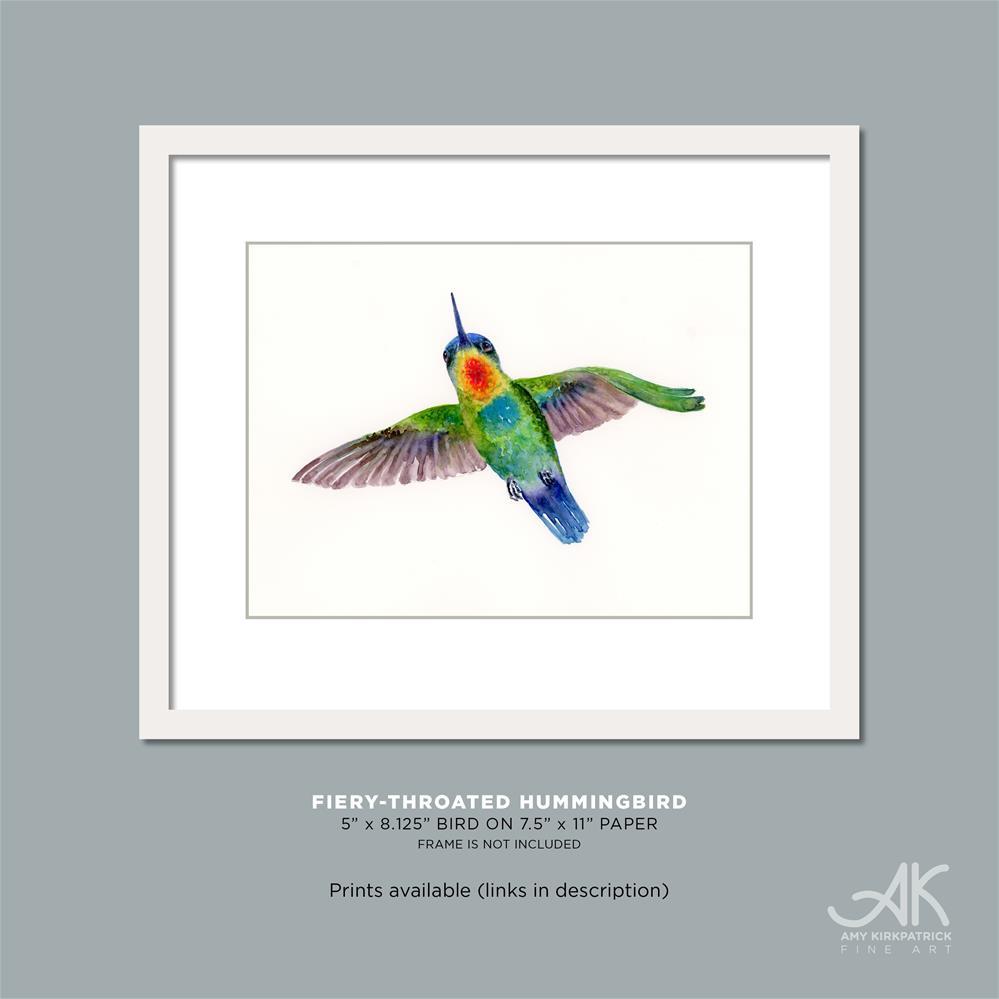 """FIERY-THROATED HUMMINGBIRD #0467"" original fine art by Amy Kirkpatrick"