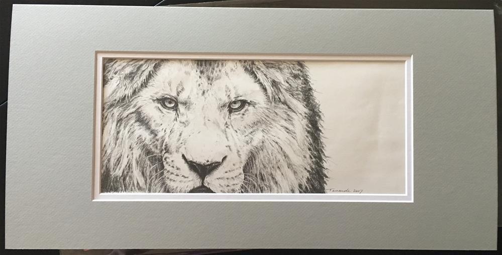 """""""Lion"""" original fine art by Tamanda Elia"""