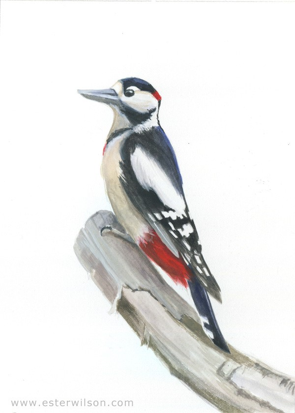 """Great Spotted Woodpecker"" original fine art by Ester Wilson"