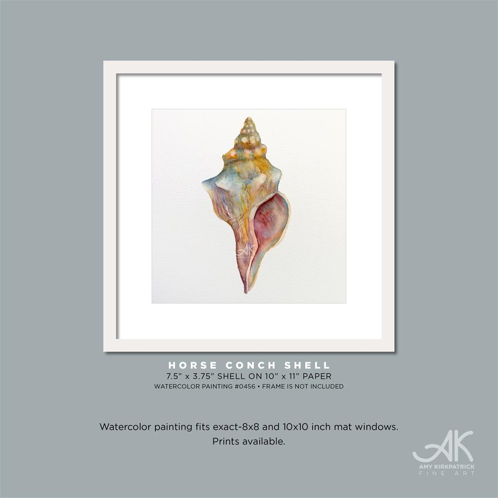 """HORSE CONCH SHELL #0456"" original fine art by Amy Kirkpatrick"