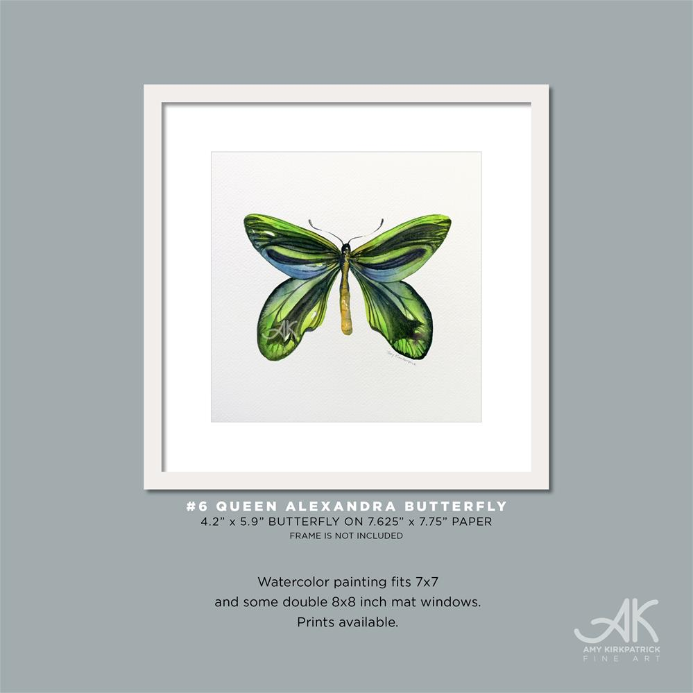 """#6 Queen Alexandra Butterfly #0315"" original fine art by Amy Kirkpatrick"