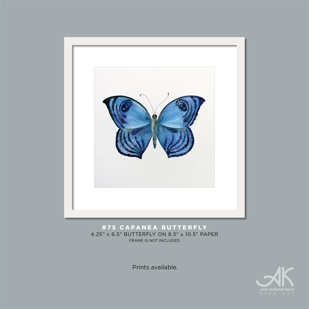 """#75 Capanea Butterfly #0385"" original fine art by Amy Kirkpatrick"