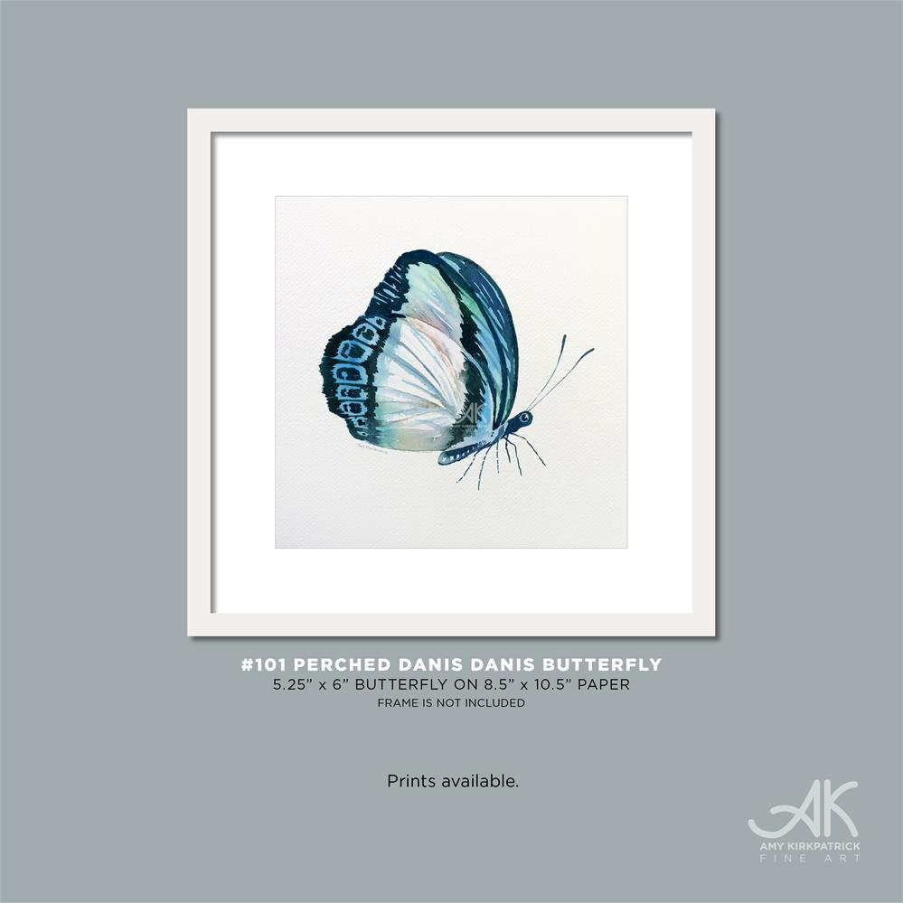 """""""#101 Perched Danis Danis Butterfly #0422"""" original fine art by Amy Kirkpatrick"""