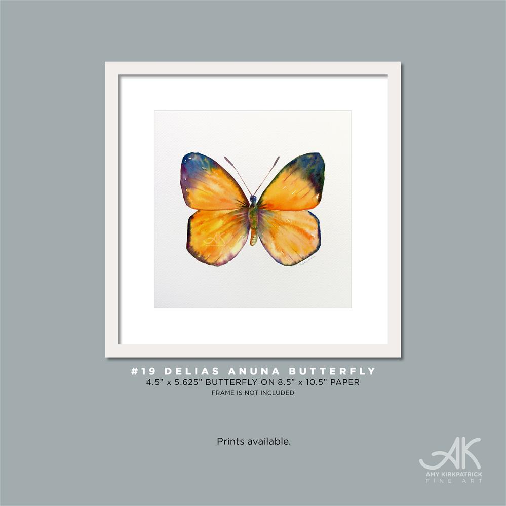 """#19 Delias Anuna Butterfly #0328"" original fine art by Amy Kirkpatrick"