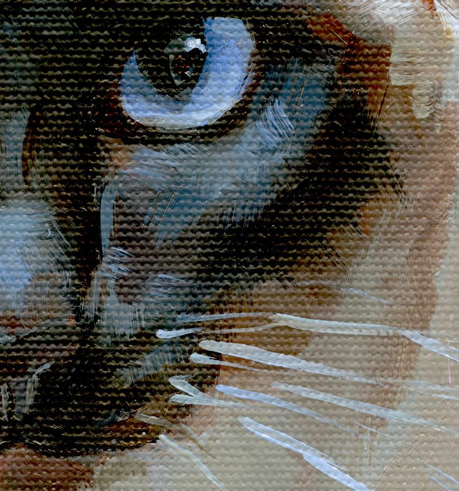 """Piercing Gaze of the Siamese"" original fine art by J. Dunster"