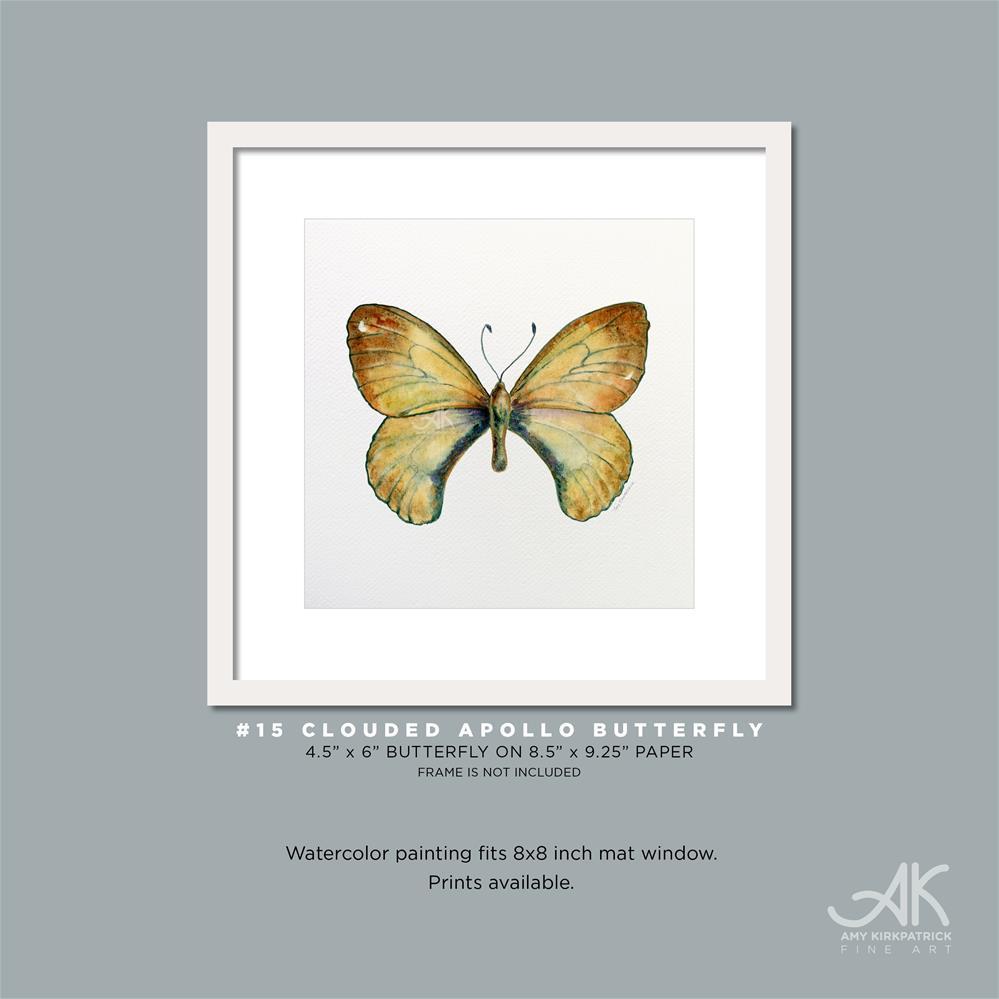 """#15 Clouded Apollo Butterfly #0324"" original fine art by Amy Kirkpatrick"