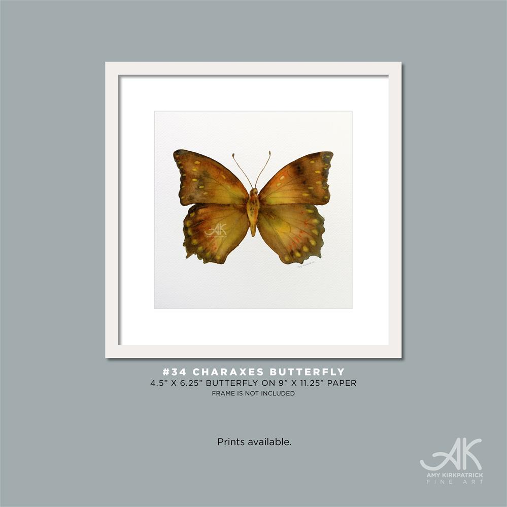 """#34 Charaxes Butterfly #0343"" original fine art by Amy Kirkpatrick"