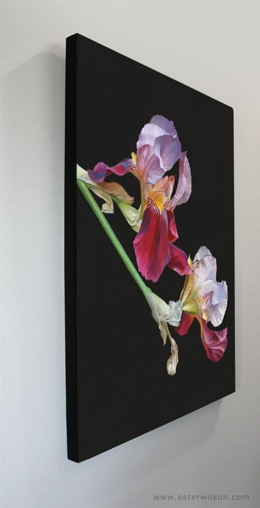 """Night Iris"" original fine art by Ester Wilson"