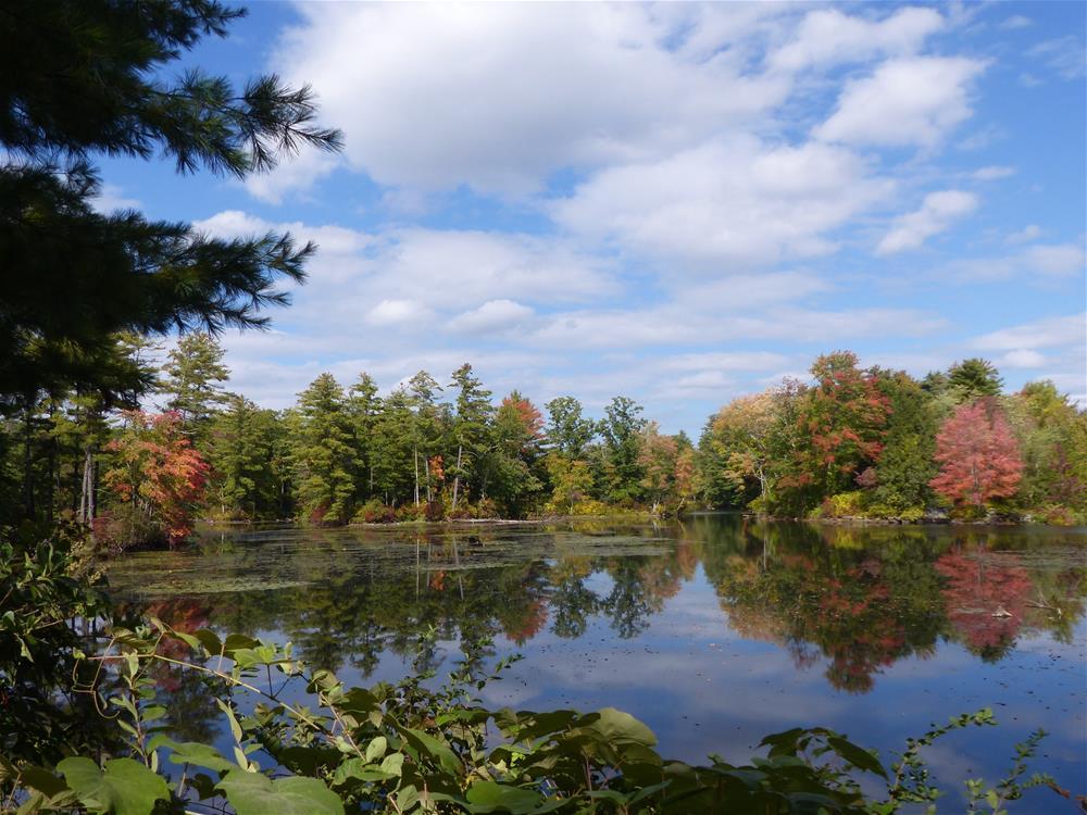 """Mill Pond Reflections"" original fine art by Judith Freeman Clark"