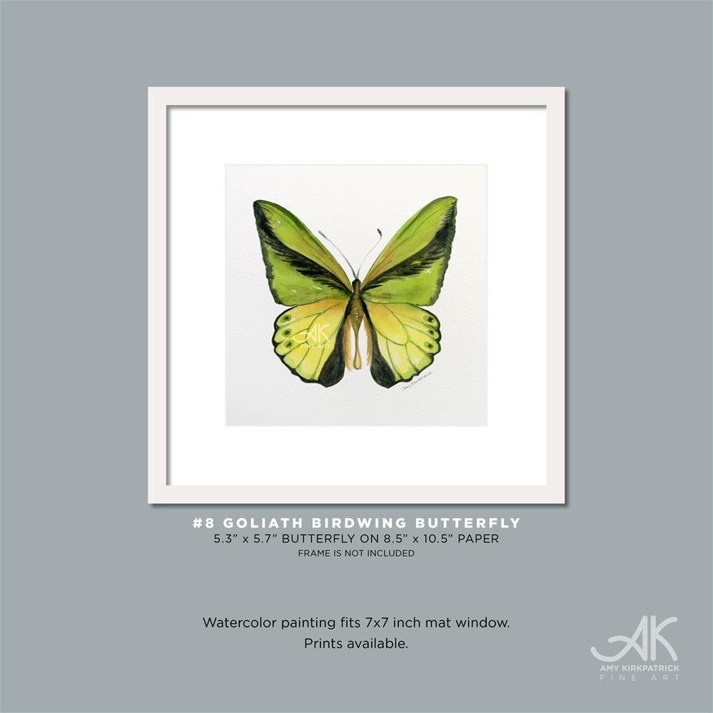 """""""#8 Goliath Birdwing Butterfly #0317"""" original fine art by Amy Kirkpatrick"""