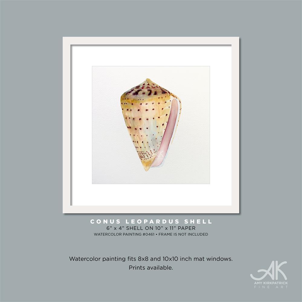 """CONUS LEOPARDUS SHELL #0461"" original fine art by Amy Kirkpatrick"