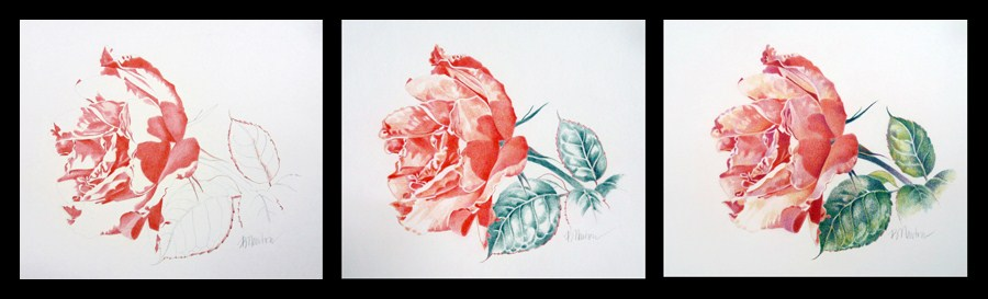 """The Rose"" original fine art by Barbara Benedetti Newton"