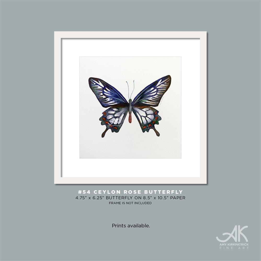 """#54 Ceylon Rose Butterfly #0364"" original fine art by Amy Kirkpatrick"